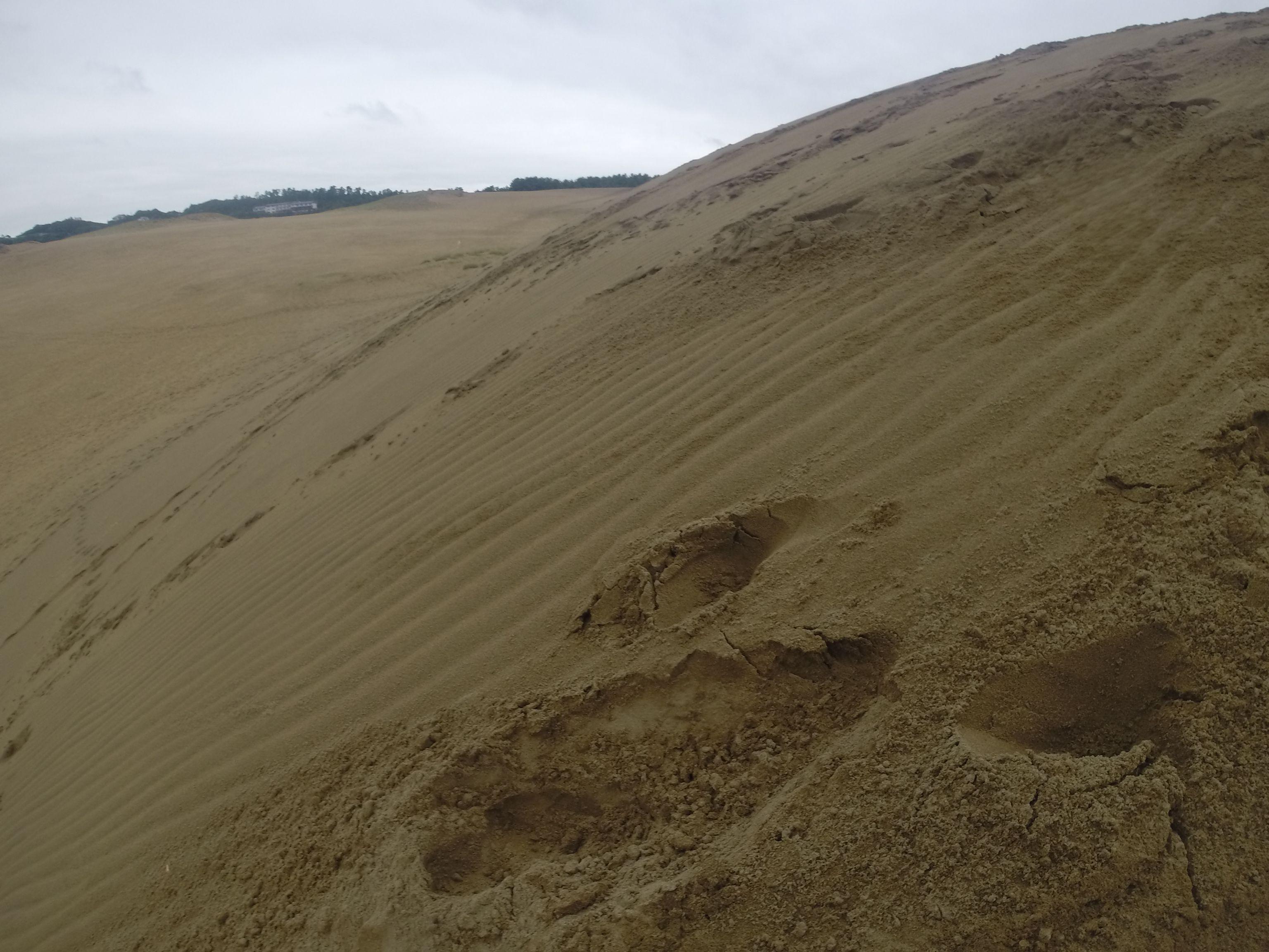 たっぷり湿り気を帯びた砂丘の地面