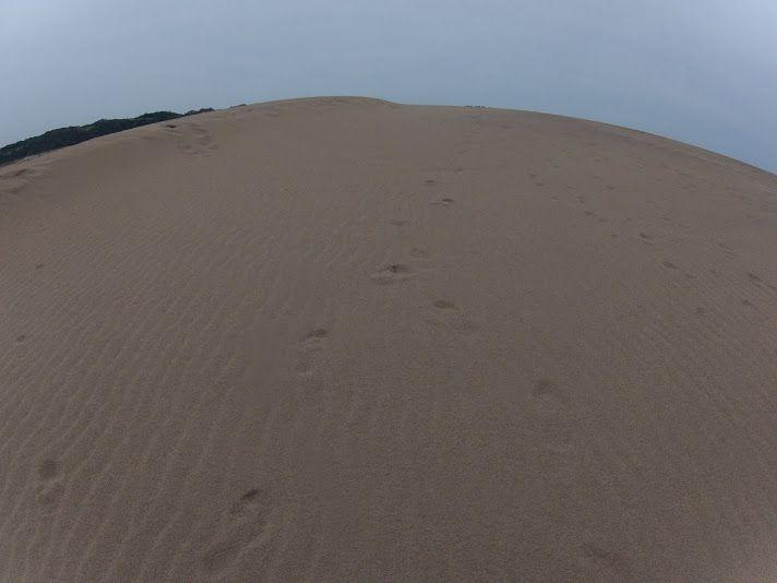 控えめな日差しだった鳥取砂丘