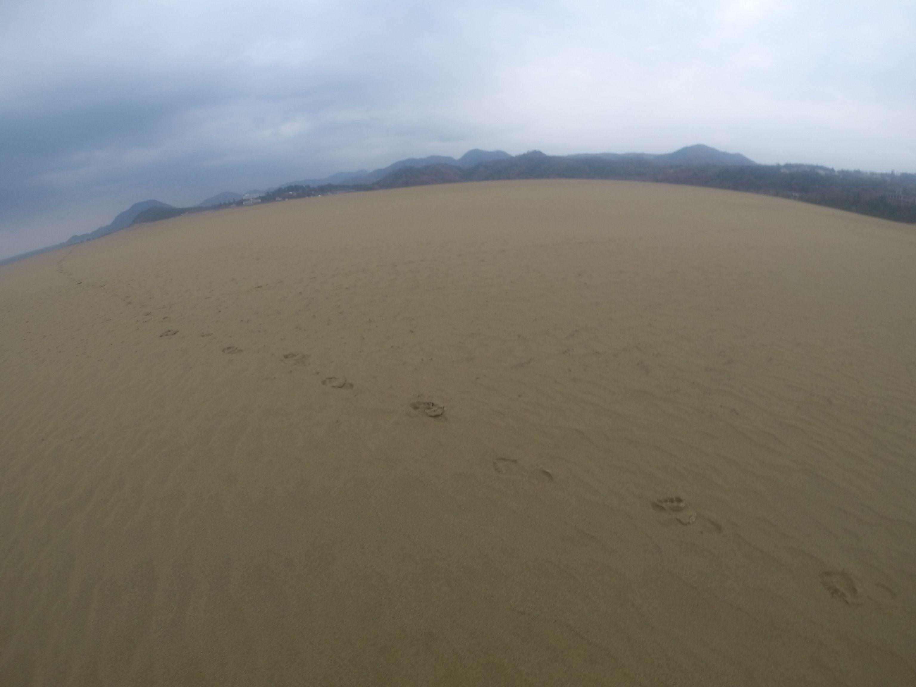 すっかり足跡が消えた鳥取砂丘