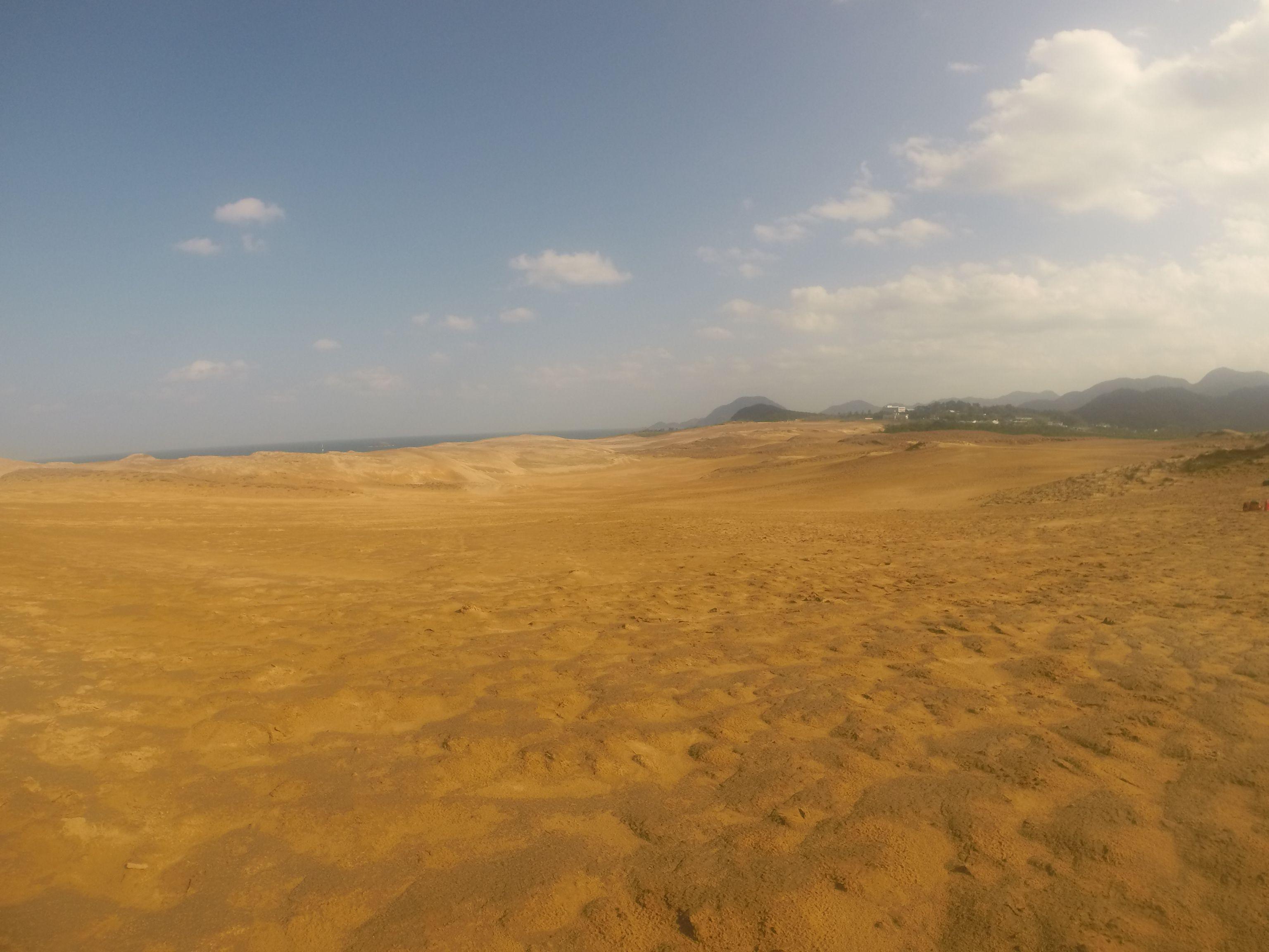 たっぷり雨が降って湿っている砂丘の砂