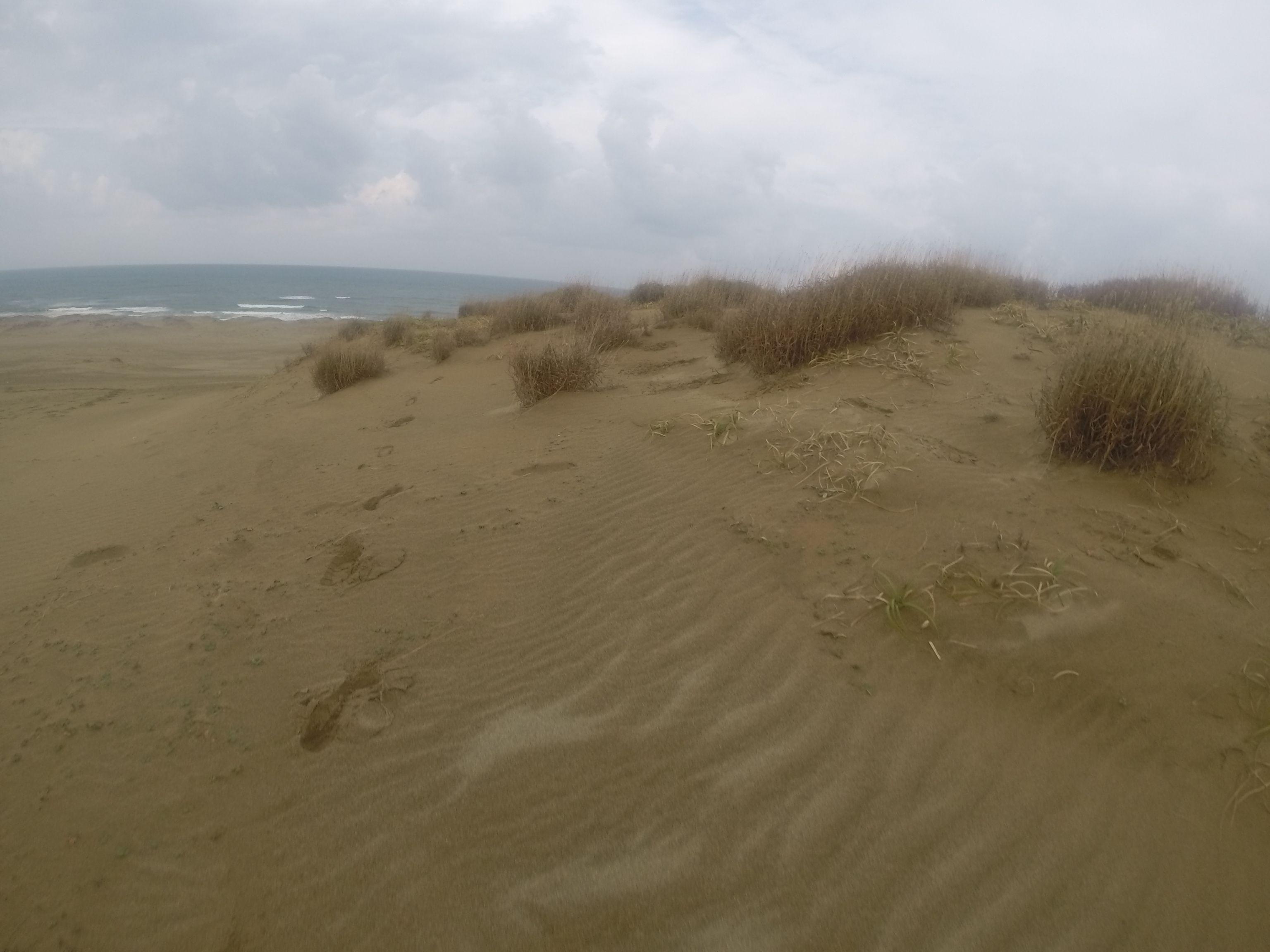 ちょっと湿っぽさの残る地面の砂