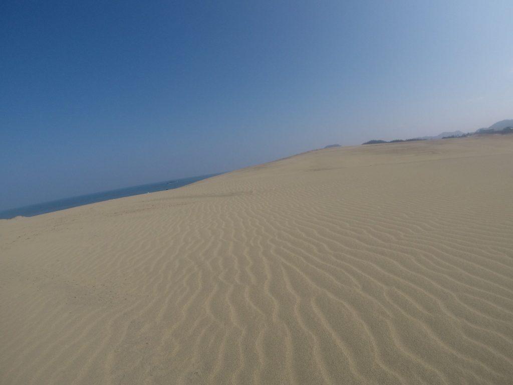 鮮やかな風紋が見られた鳥取砂丘
