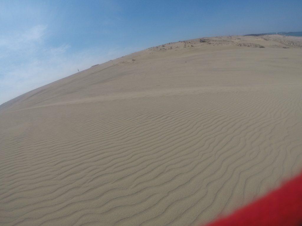 風紋いっぱいの鳥取砂丘