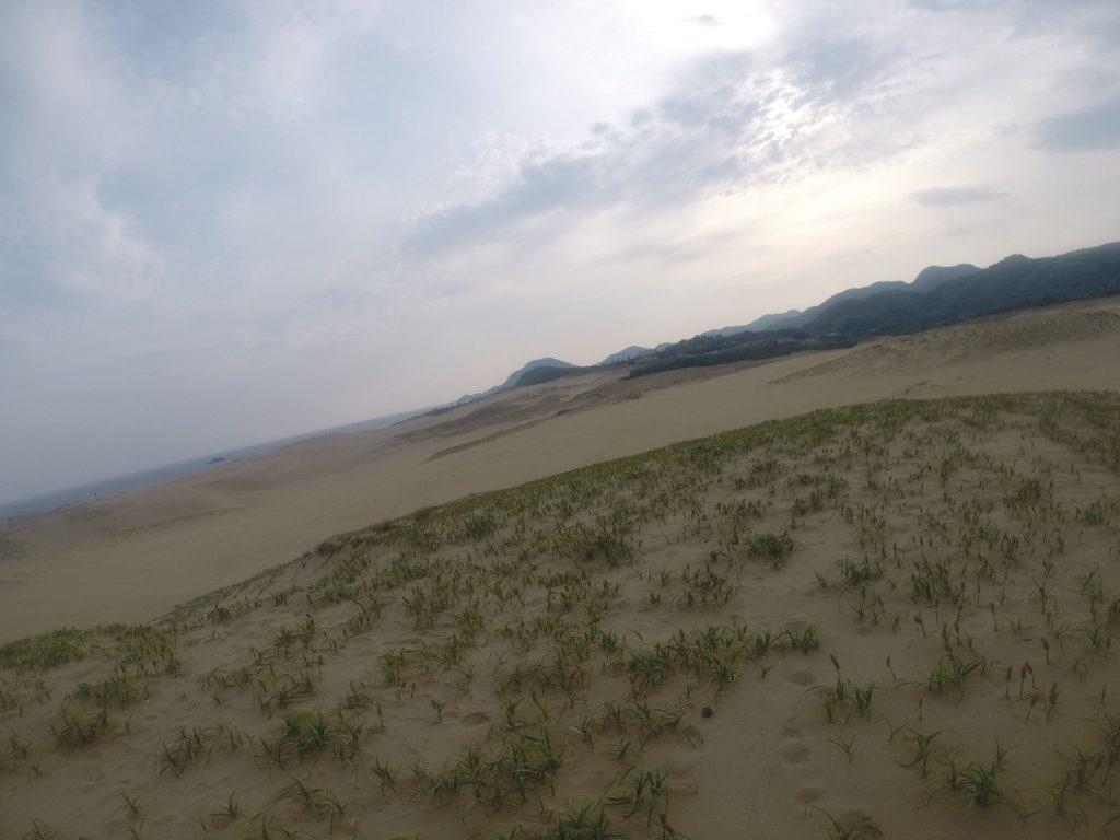 砂がバンバン移動する鳥取砂丘