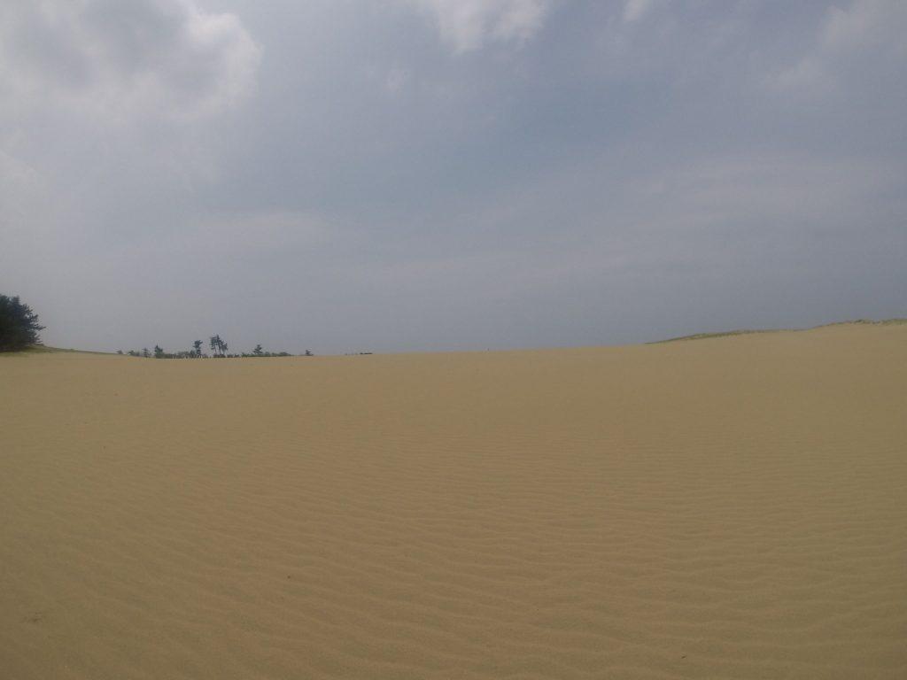 人が来ていないようで鮮やかな風紋が残る鳥取砂丘