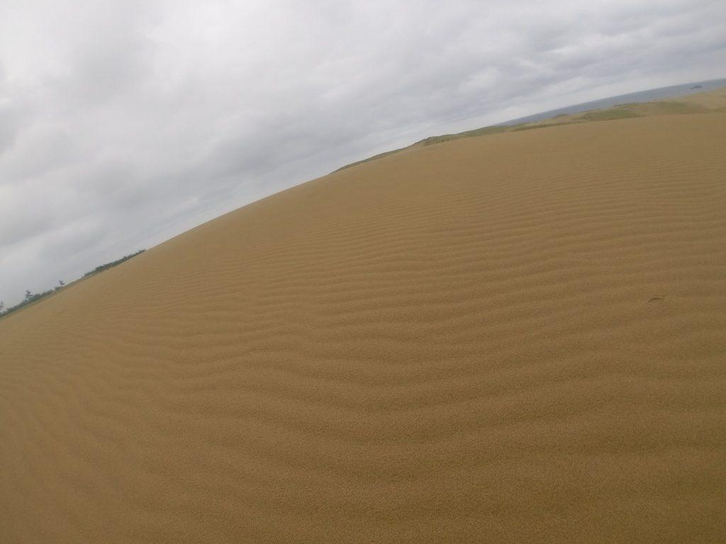 雨ですっかり湿った砂丘の風紋