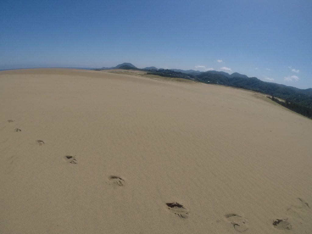 湿っていつもより歩きやすい鳥取砂丘