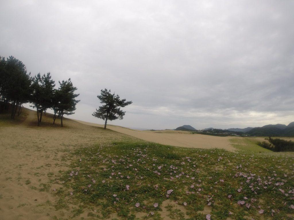 しっとり花も潤っている鳥取砂丘