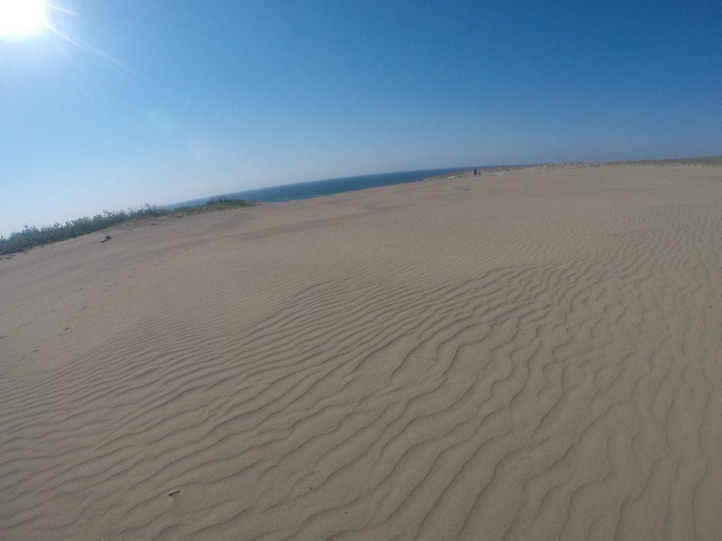 鮮やかな風紋が美しい鳥取砂丘