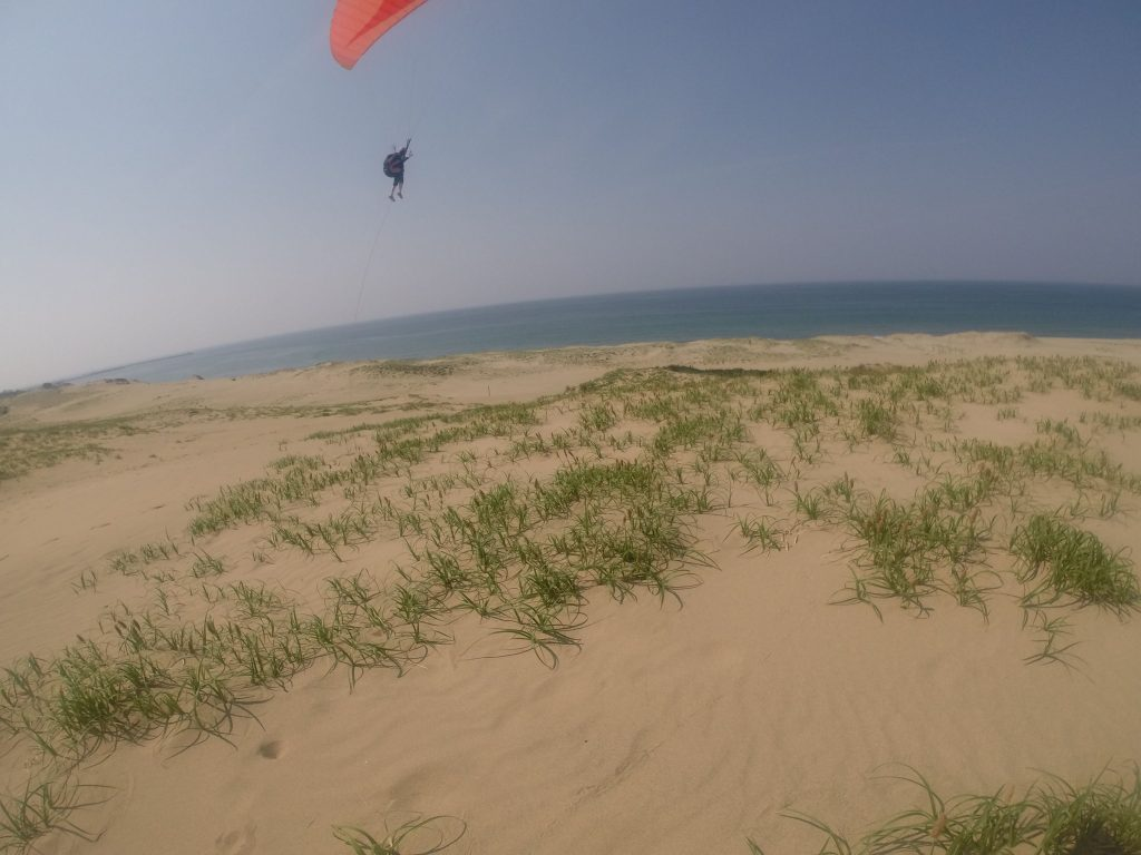 砂の上をどこまでも飛んでいく