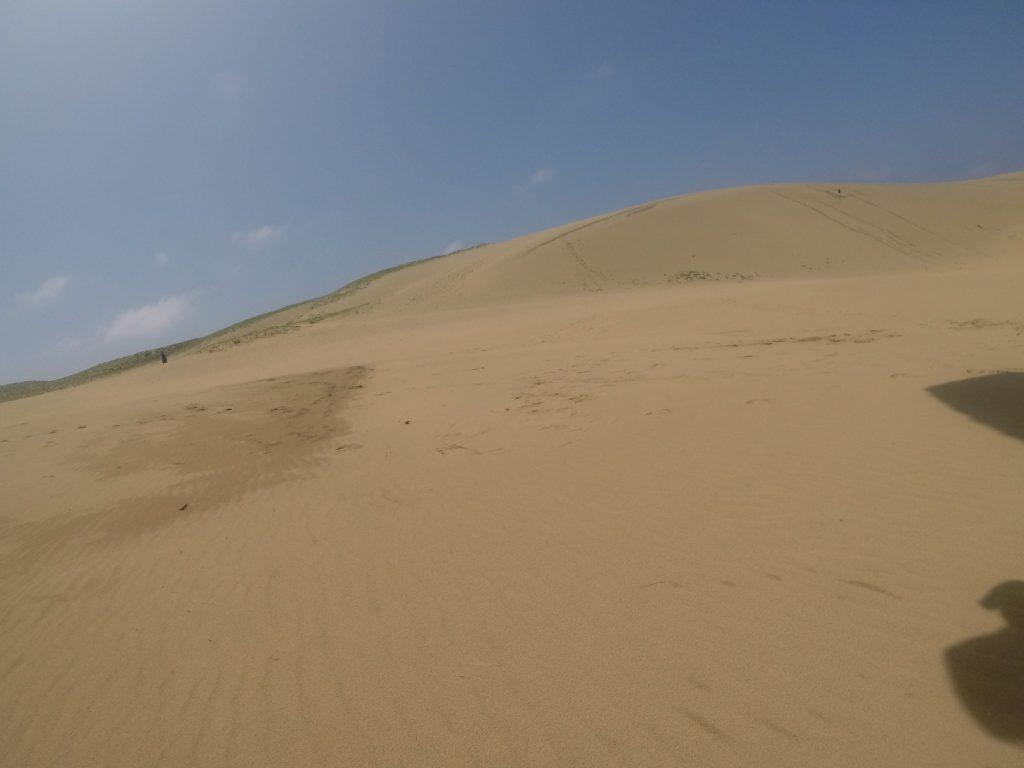 青空と風紋がいっぱいの鳥取砂丘