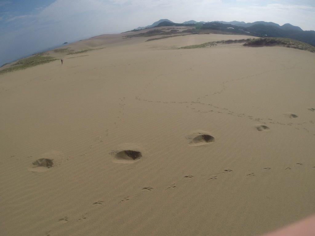 カラスの足跡がたくさんある鳥取砂丘