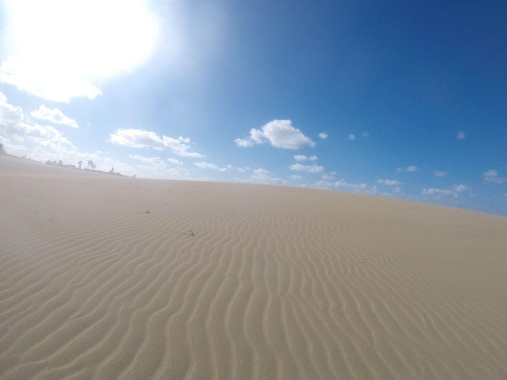 あっという間に足跡が消えて、風紋だらけの鳥取砂丘