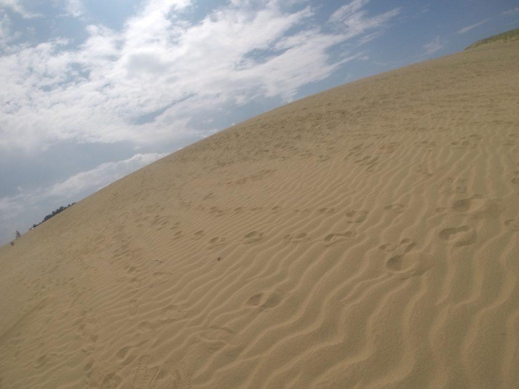 たくさんの風紋が見られた鳥取砂丘