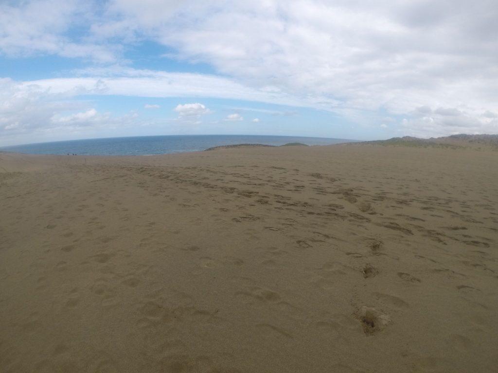 元気に動物たちが走り回る鳥取砂丘