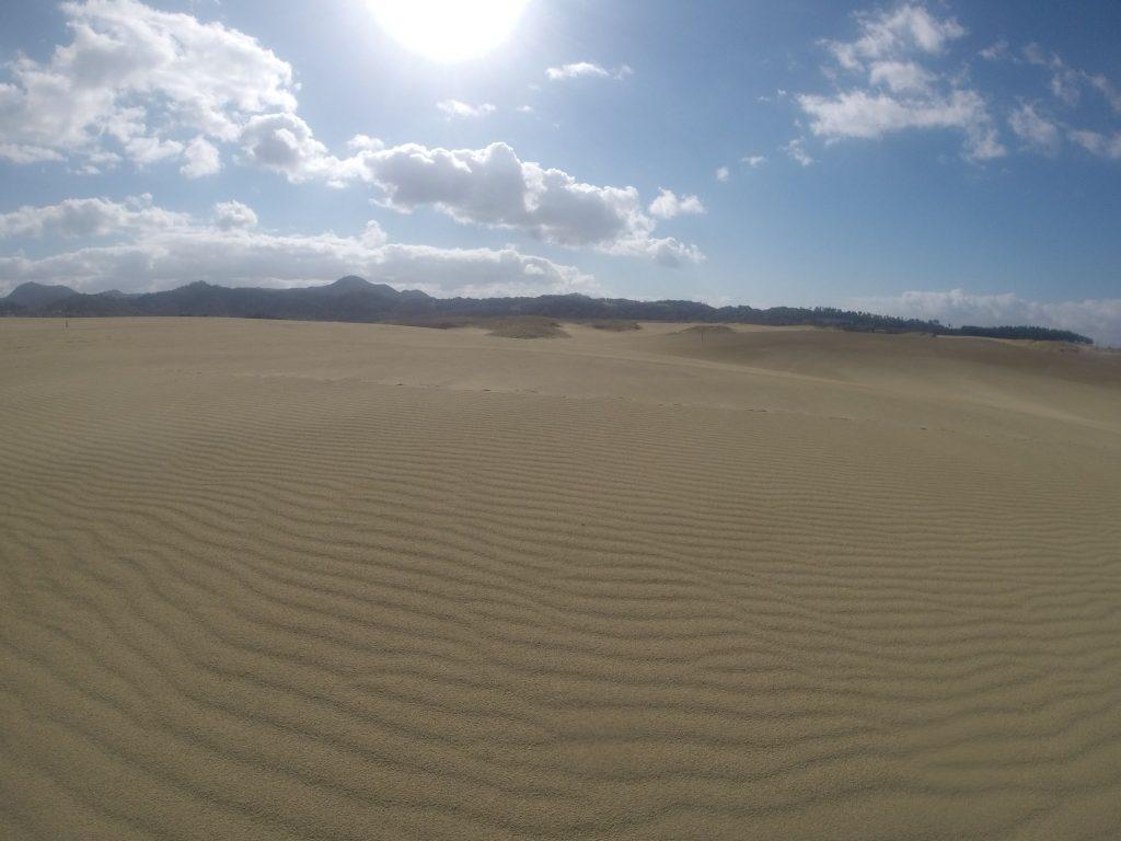 美しい風紋がたくさん見られた鳥取砂丘