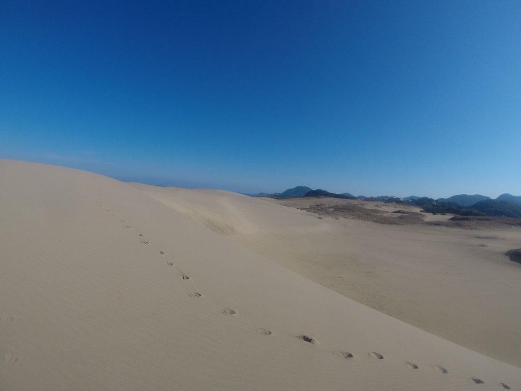 いつになく青空になって、散歩が捗った鳥取砂丘
