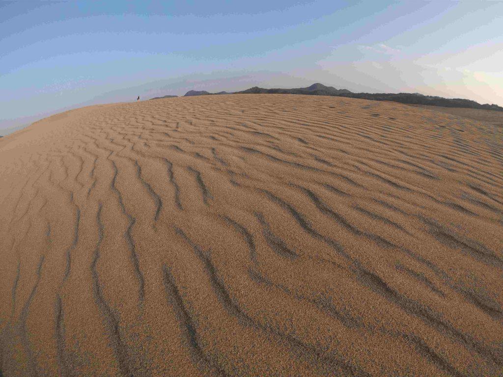 晴れやかな空と、美しい風紋が楽しめた鳥取砂丘