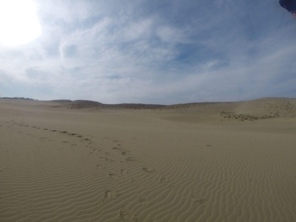 強風のため、みるみる風紋が広がった鳥取砂丘