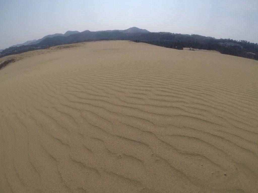 鮮やかな風紋が広がった鳥取砂丘