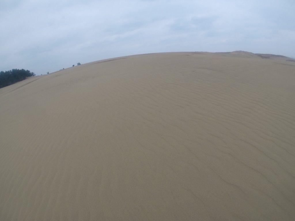 強風ですぐに風紋ができた鳥取砂丘