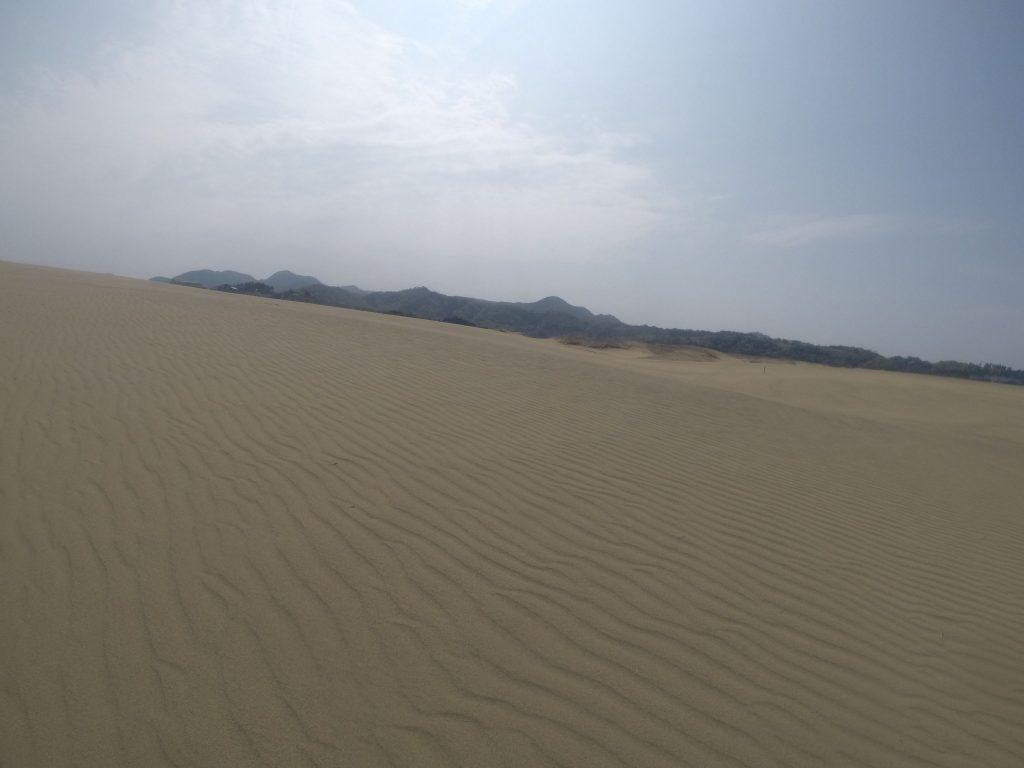 美しい風紋が楽しめる鳥取砂丘