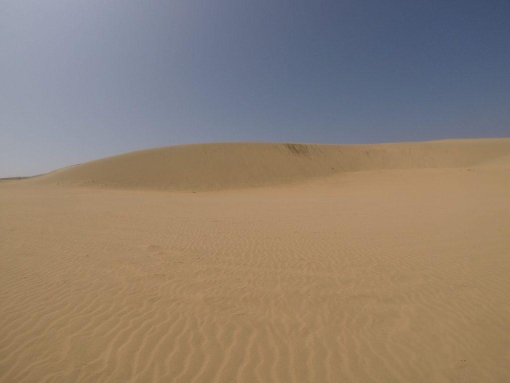 砂丘らしさ満点の風景が楽しめます