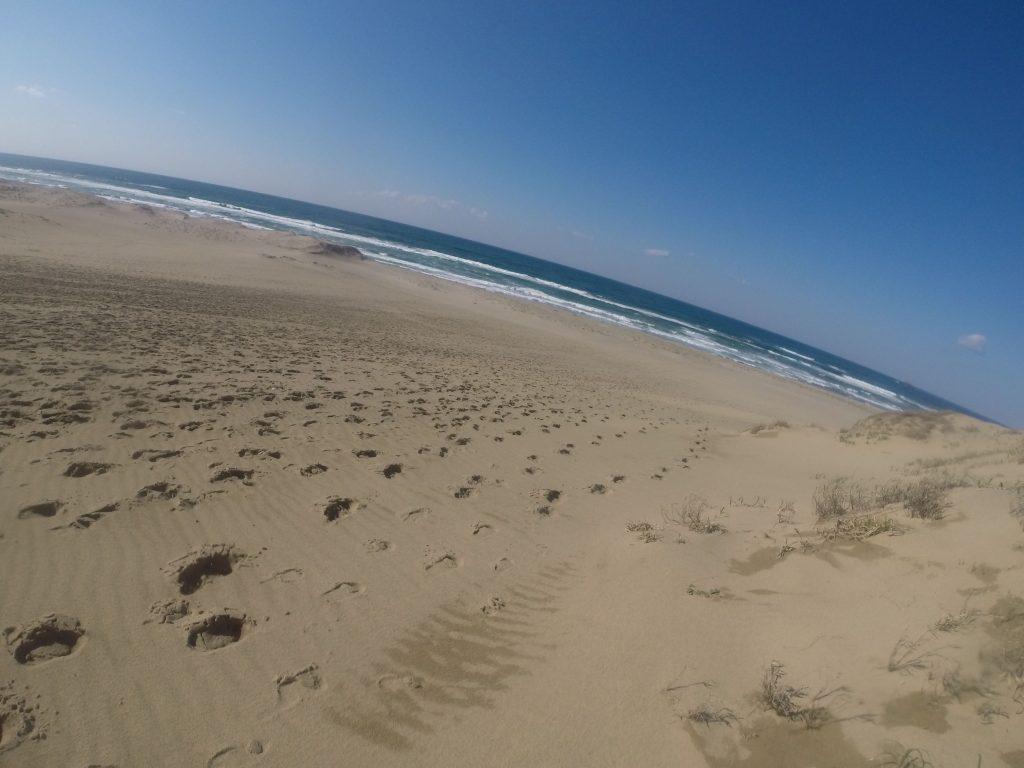 たくさんの足跡が海岸までのびていた鳥取砂丘