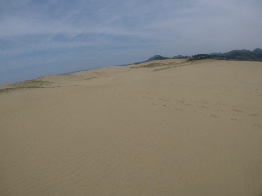 風紋が美しく現れている鳥取砂丘