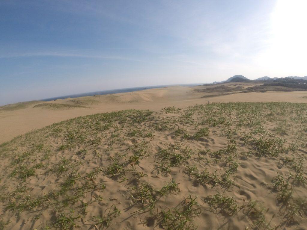晴れて暑くなってきた鳥取砂丘