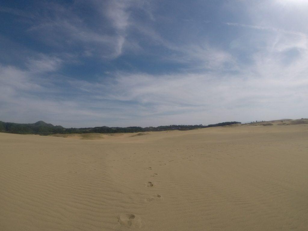青空と風紋が楽しめる鳥取砂丘