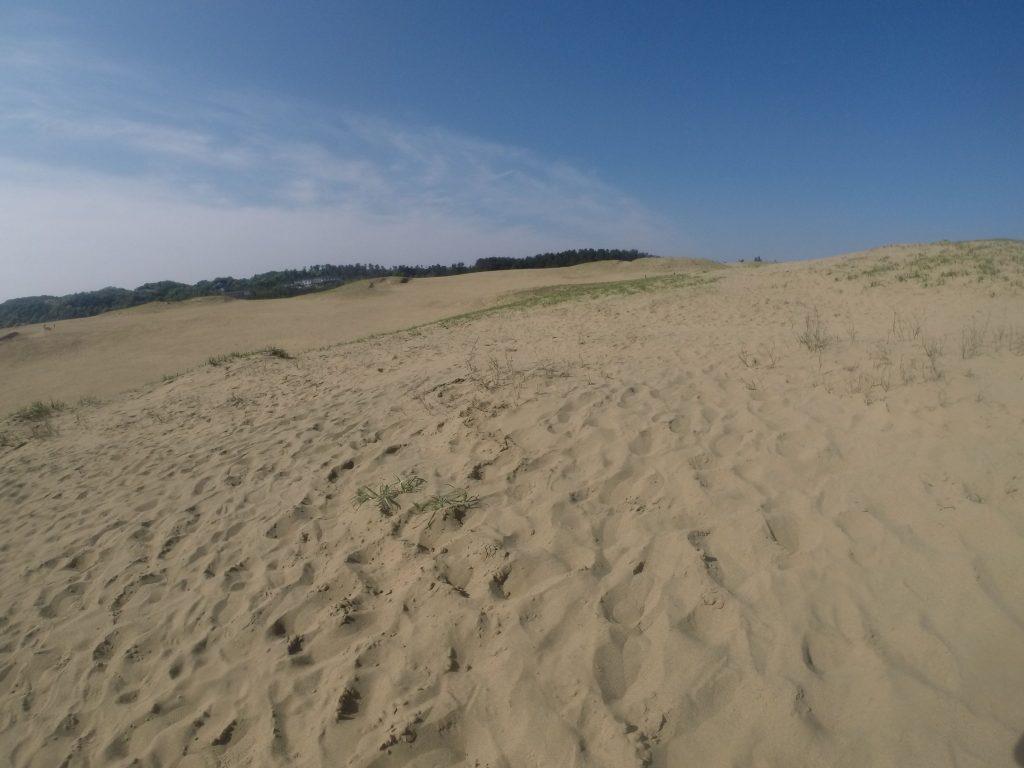 砂と空のコントラストがきれいな鳥取砂丘